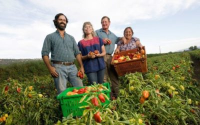Immune to the Shocks of Climate Change: How Farmers are Creating Resilient Local Food Systems