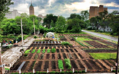Twelve Organizations Promoting Urban Agriculture around the World
