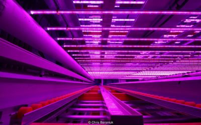How vertical farming reinvents agriculture